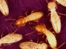 Top 10 Termite Treatment Products