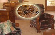 The 5 Signs Of Termites In Furniture