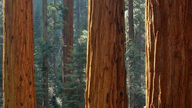 do termites eat redwood