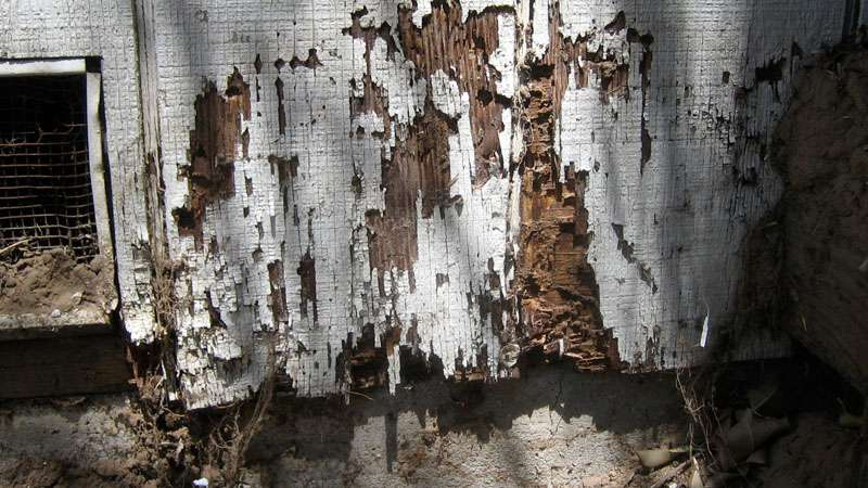 termite damage structure