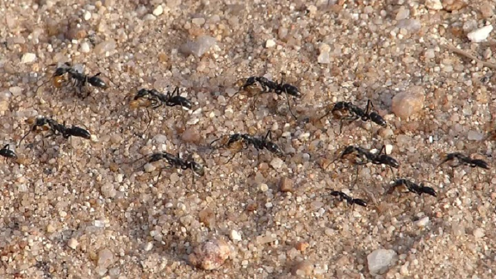 Swarming season for termites