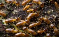 How do termites survive?