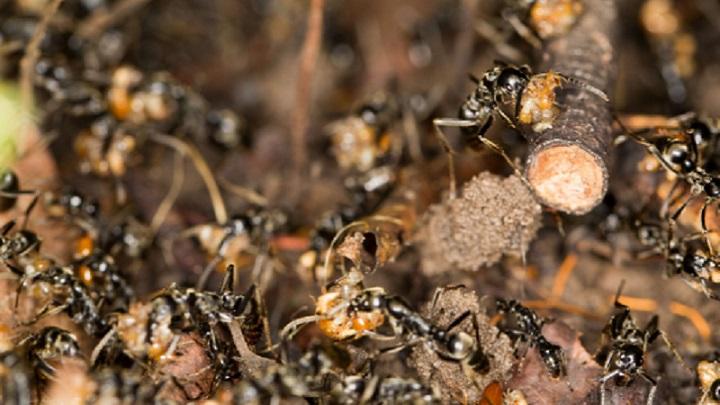 The best DIY termite treatment