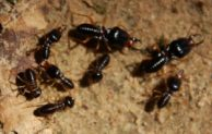 What Do Termites Look Like and Tips to Get Rid of Them