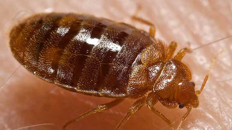 Exceptional When It Comes To Getting Rid Of Common Household Bugs, The First Thing You  Must Do Is Identify Which Pests Are Actually In Your Home.