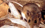 Baby Cockroaches Vs Bed Bugs Vs Carpet Beetles Termites Blog