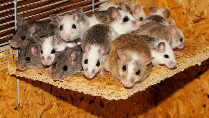 Natural Ways To Keep Mice Away