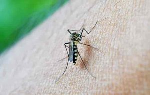 5 Tips That You Can Try To Avoid The Mosquito Bites