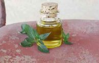 Benefits of Peppermint Oil to Get Rid of Mice