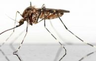 Do Mosquitoes Die After They Bite You? Learn About It Now!