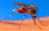 How Many Legs Does a Mosquito Have? Read this to know!