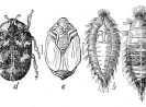 Common Types of Carpet Beetles and What do They Look Like
