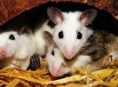 Favorite Places of Mice to Hide During the Day and Tips to Indentify