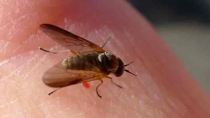 the safe and natural fly repellent for humans
