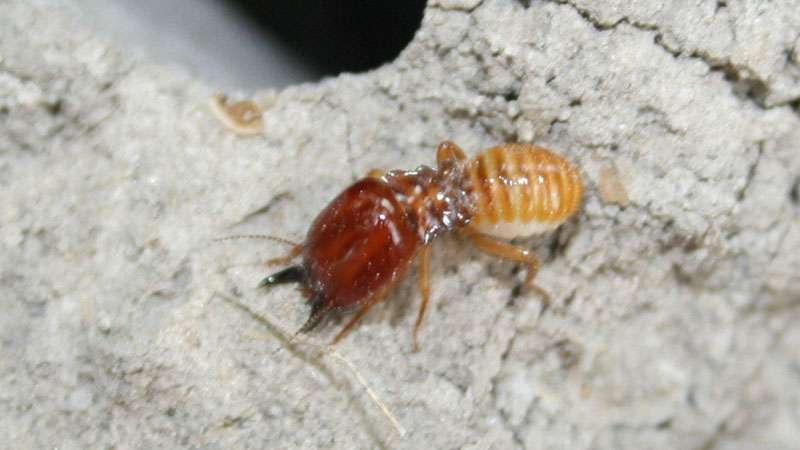 average termite tenting cost