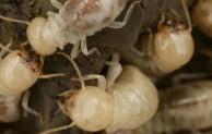 Proven Termite Solutions: Tips From The Experts