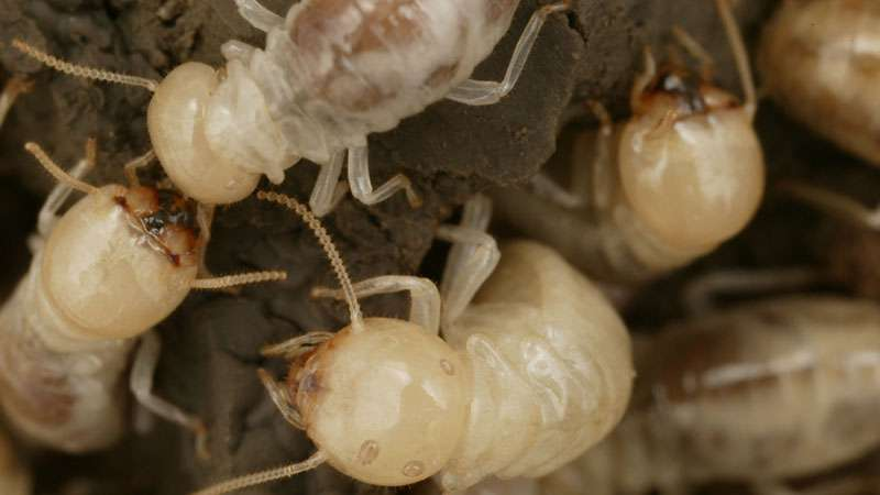 proven termite solutions tips