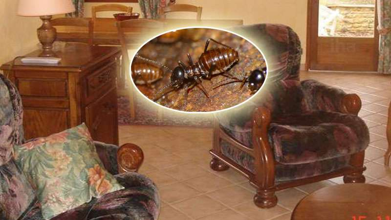 Merveilleux Signs Of Termites In Furniture