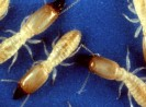 Protect Your Home with the Best Chemical for Termites