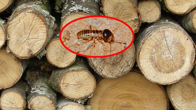 Protect wood from termites naturally