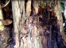 Do termites eat living trees? Here are the quick answer