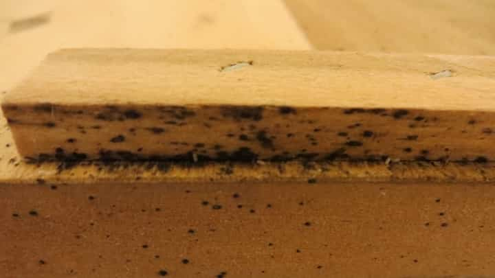 how to find bed bug nests in your home termites blog. Black Bedroom Furniture Sets. Home Design Ideas