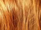 Bed Bugs in the Hair Treatments