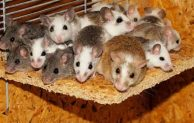Top 10 Natural Ways to Keep Mice Away from Your Home