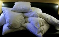 How to Get Rid of Carpet Beetle on Pillow