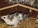 6 Common Spots to the Mice Get in The House: And Tips to Prevent it