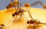 Top 6 The Best Ways to Get Rid of Fruit Flies