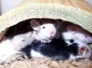 3 Proven Ways to Get Rid of Mice in Your House