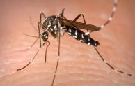 Where do Mosquitoes Lay Their Eggs