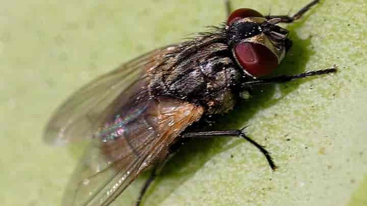 how to read a masthead fly